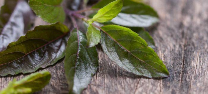 तुलसी अर्क के फायदे तुलसी पत्ते चबाने के नुकसान तुलसी के बीज का महत्त्व तुलसी के फायदे और नुकसान तुलसी रस पतंजलि तुलसी के उपयोग इन हिंदी तुलसी के पत्ते कैसे खाये तुलसी के फायदे चेहरे के लिए तुलसी अर्क साइड इफेक्ट्स पंच तुलसी के फायदे जॉली तुलसी 51 के फायदे तुलसी अर्क बनाने की विधि पतंजलि तुलसी अर्क प्राइस श्री तुलसी के फायदे श्री तुलसी अर्क पतंजलि तुलसी अर्क के फायदे तुलसी के पत्तों का सेवन खाली पेट तुलसी खाने के फायदे तुलसी के पत्ते खाने के क्या फायदे है सुबह खाली पेट तुलसी खाने के फायदे तुलसी के नुकसान तुलसी के बीज के फायदे तुलसी के बीज का उपाय तुलसी के बीज का भाव तुलसी के बीज का उपयोग कैसे करे तुलसी के बीज का उपयोग कैसे करें तुलसी बीज पान तुलसी के बीज के टोटके तुलसी बीज के फायदे इन हिंदी तुलसी बीज और पान तुलसी की जानकारी तुलसी अर्क पतंजलि पतंजलि तुलसी घनवटी बेनिफिट्स पतंजलि तुलसी अमृत तुलसी ड्रॉप्स तुलसी रस के फायदे तुलसी के पत्ते खाने के फायदे तुलसी का रस चेहरे पर लगाने के फायदे तुलसी के फायदे हिंदी में तुलसी फोर स्किन तुलसी बेनिफिट्स फोर स्किन